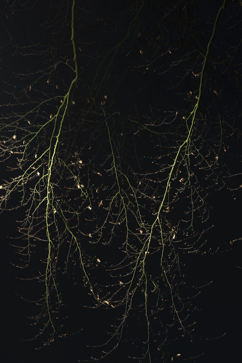 Trees_by_Night